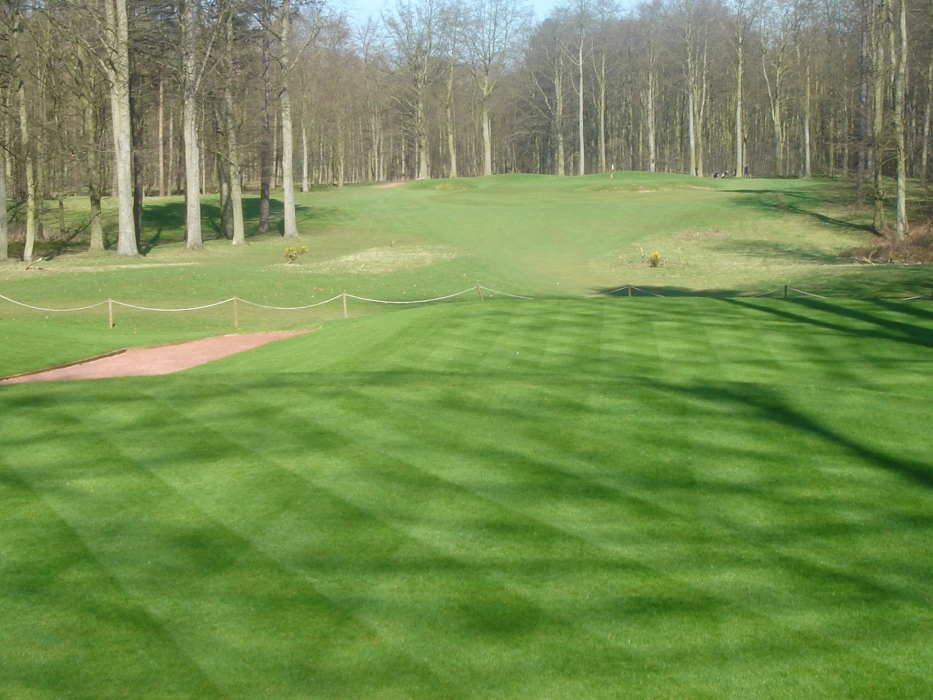 Forest Pines Bargold Golf Tee